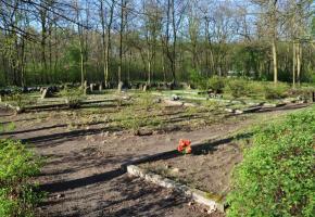 Groby ofiar Zagłady na cmentarzu w Miłostowie