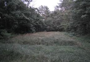 Uroczysko Chojniki koło Antopola - miejsce egzekucji i grób zbiorowy